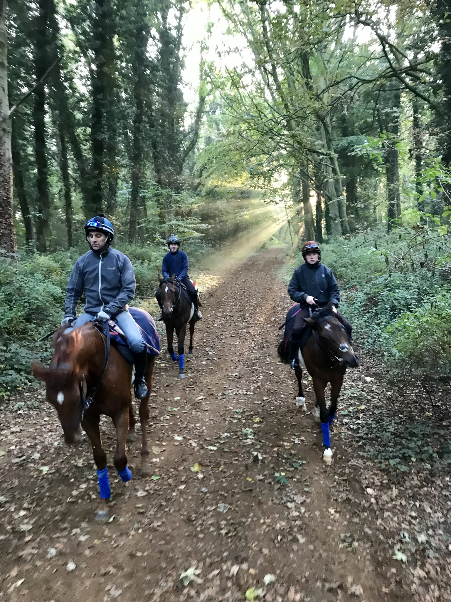 The two year old colts walking through the woods on the way home.