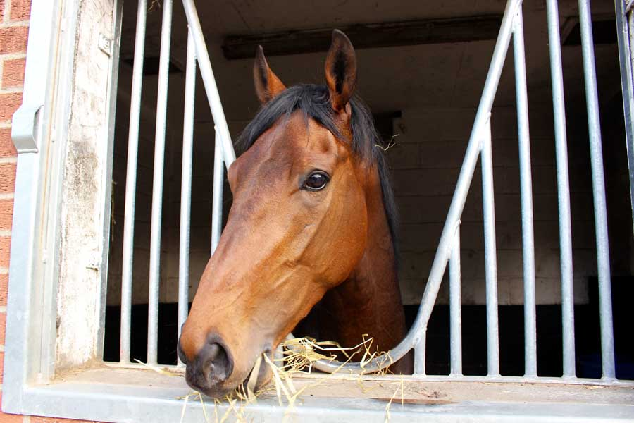 City Guest (IRE) horse in training with George Margarson Racing