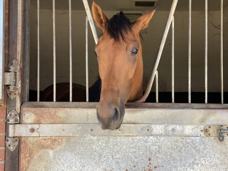 Hot Date horse in training with George Margarson Racing