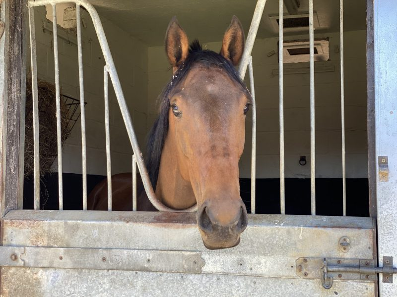 Technological horse in training with George Margarson Racing