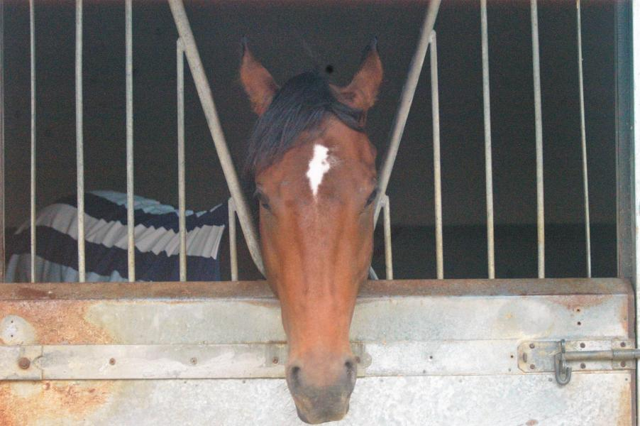 Blame Culture horse in training with George Margarson Racing