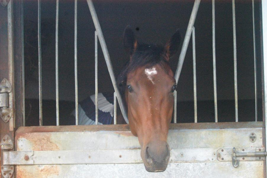 Heavenly Guest horse in training with George Margarson Racing
